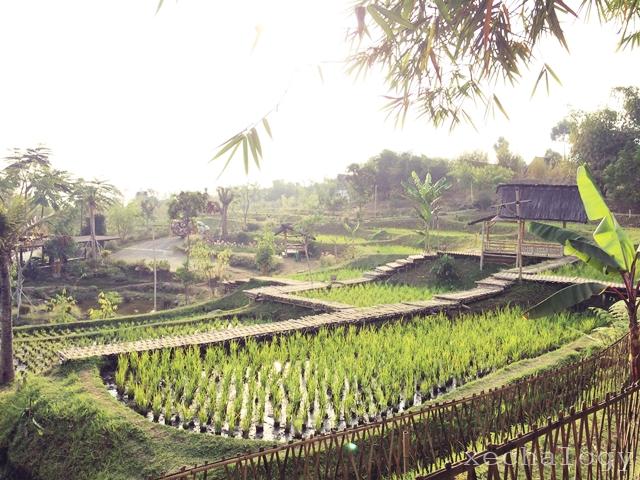 trip ke bandung, dusun bambu