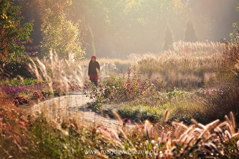 gramíneas ornamentales otoño