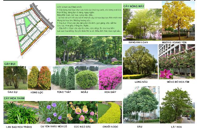 vườn hoa the green daisy