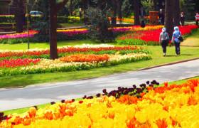 tulips-park-turki-paket-plus-turki