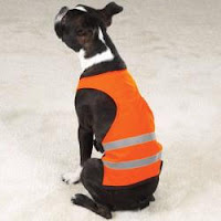 Boston Terrier Construction in orange safety vest with reflective stripes