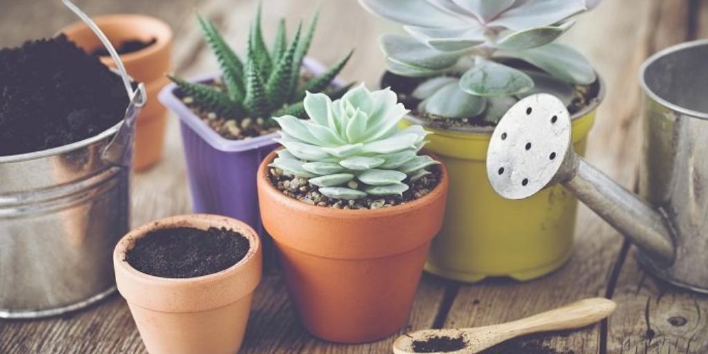 ¡Dale vida a tu jardín con cactus!