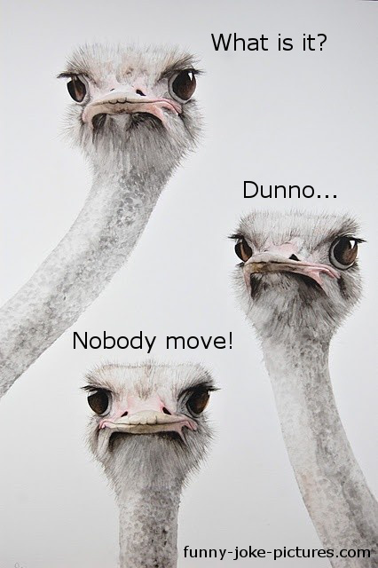 Hilarious Animal Bird Ostrich Photo