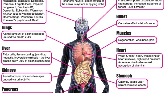 Short Term Effects Of Alcohol Effects Of Alcohol In The Body