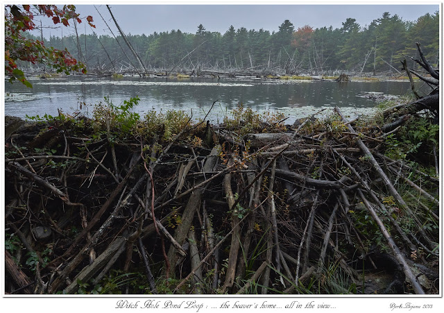 Witch Hole Pond Loop: ... the beaver's home... all in the view...