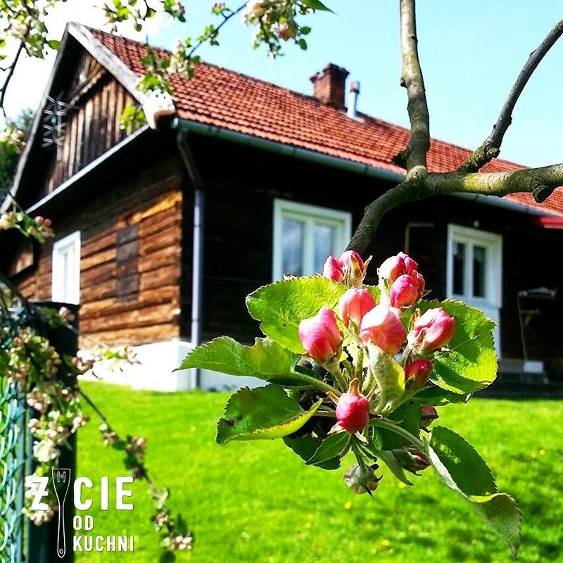 dom, dom z drewna, dom z bali, ogrod, jablon, kwiaty jabloni, wiosna, maj, majowka, trawa, zielona trawa,przepisy na szparagi, danie na grilla, grill,  trawnik, blog, zycie od kuchni