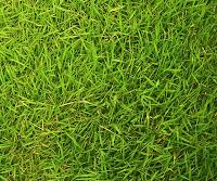 Yeşil çimlik veya çimenlik