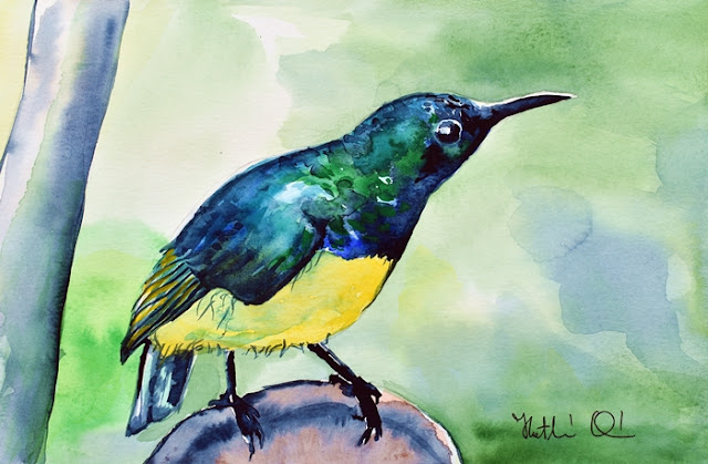 Yellow Bellied Sunbird watercolor painting by Dora Hathazi Mendes