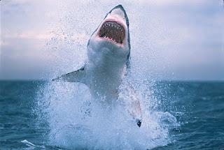 tubarões ao vivo