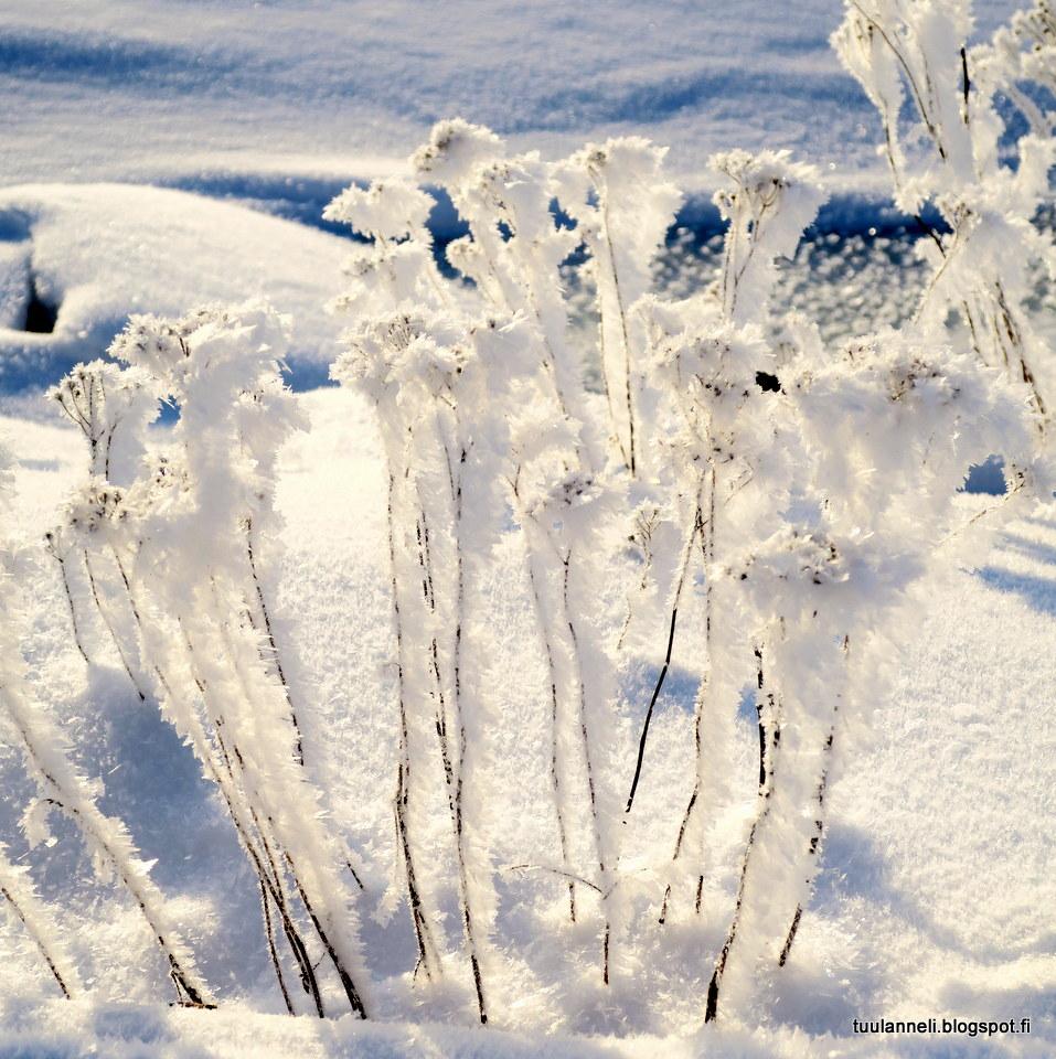 talvinen runo Uusikaupunki