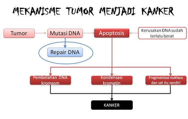 ALL IS WELL: Perbedaan tumor dan kanker