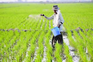 Pengertian Pertanian Adalah Cara Budidaya Pertanianperkebunan