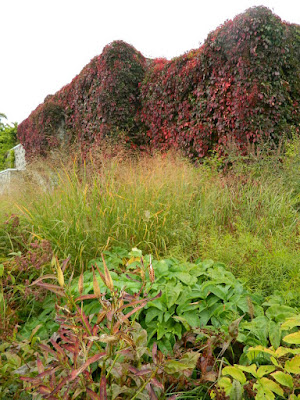 Entry Garden Walk at the Toronto Botanical Garden autumn Switch Grass Panicum by garden muses-not another Toronto gardening blog