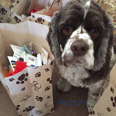 Cocker Spaniel next to bag with paw prints