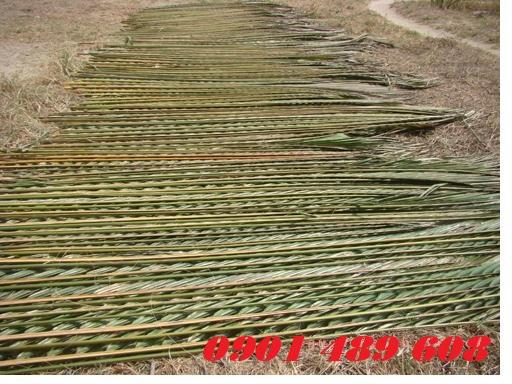 mẫu lá dừa nước
