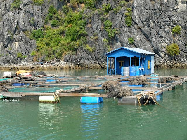 pisciculture baie halong voyage vietnam tour bateau par cat ba, mer montagne paysage vietnam