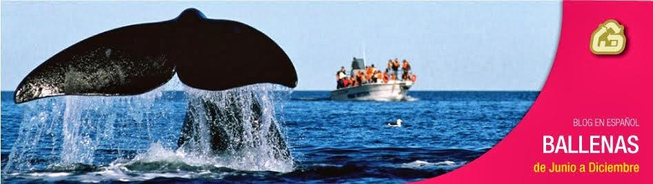 hotel ideal para ver ballena franca austral en avistajes en Peninsula Valdes