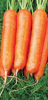 NATURAL WAY IRRIGATE OF CARROT
