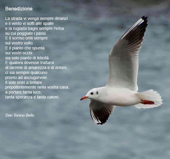 Super leggoerifletto: Vi benedico - don Tonino Bello DH55