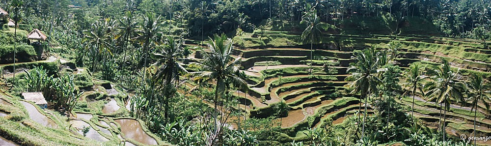 rice terraces bali day tour