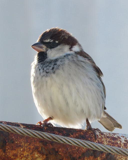 Sparrow, Nazario Sauro marina, Viale Italia, Livorno