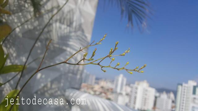 oncidium-orchid