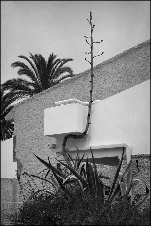 fotografia,naturaleza,limites,brote,playa_honda,cartagena