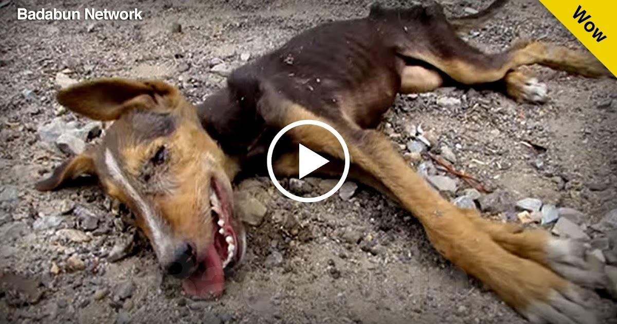 cachorro rescate historia muerte