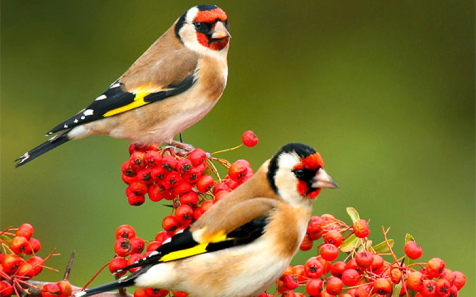 Beautiful period of sparrow nature birds hd wallpapers - Hd pics of nature with birds ...