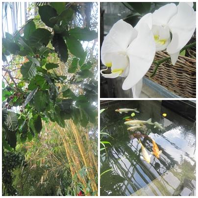 Gardenia Viikki