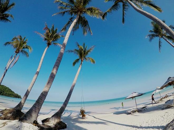 Hình ảnh các rặng dừa trên biển đảo Hòn Thơm