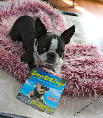 Sinead the Boston terrier and her CD