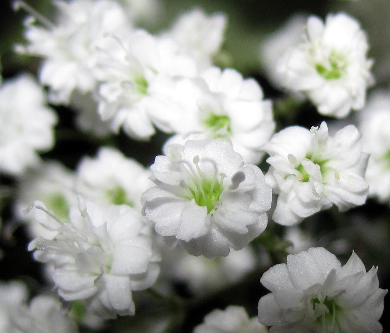 Florist Wilmington Nc Bloomers Flowers Blog Wilmington
