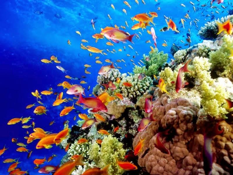 Vivere l'esperienza della Grande Barriera Corallina