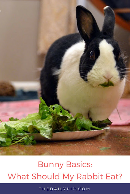 Rabbits are herbivores and should have two salads and access to hay all day