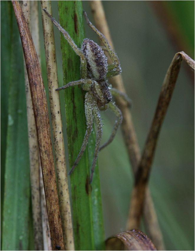 wilde perspektiven Im Wald der tausend Gerandeten Jagdspinnen
