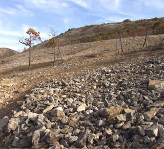 Lehigh Gap Nature Center reforestation ecological restoration bioremediation PA superfund