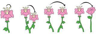 Pengertian dan Macam-macam Jenis Penyerbukan pada Tumbuhan Beserta Contohnya