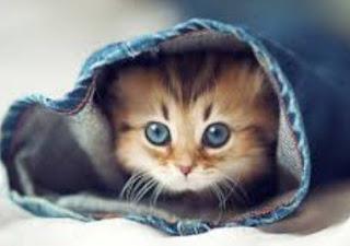 Arti Mimpi Kucing Lengkap Menurut Primbon