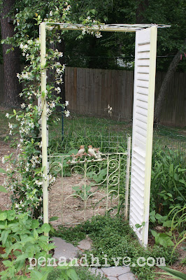 confederate jasmine on shutter trellis