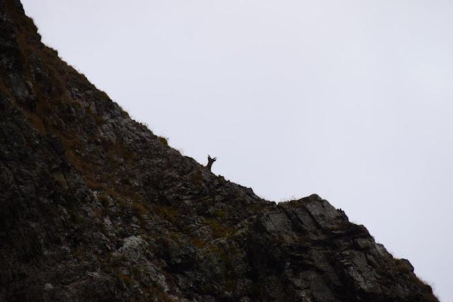 серна в горах, Турьи горы, Сочи, Активный отдых, Роза Хутор, Красная поляна, фото Андрей Думчев