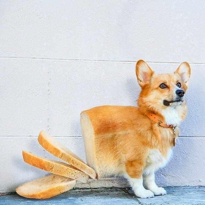 Bread-dog - photo manipulation