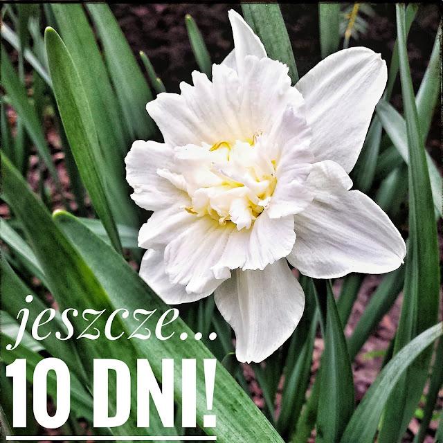 Krótka opowieść o historii pewnych tulipanów ;)