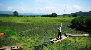 Upo Marsh Menjadi Kunjungan Musim Panas Di Korea