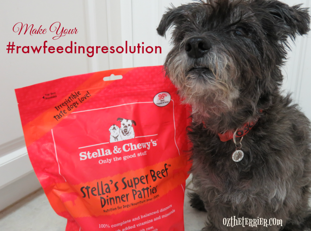 oz wants you to make Stella & Chewys raw feeding resolution