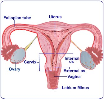nursing intervention for pre menstrual syndrome pms Read premenstrual syndrome: family impact and nursing implications, journal of obstetric, gynecologic & neonatal nursing on deepdyve, the largest online rental service for scholarly research with thousands of academic publications available at your fingertips.