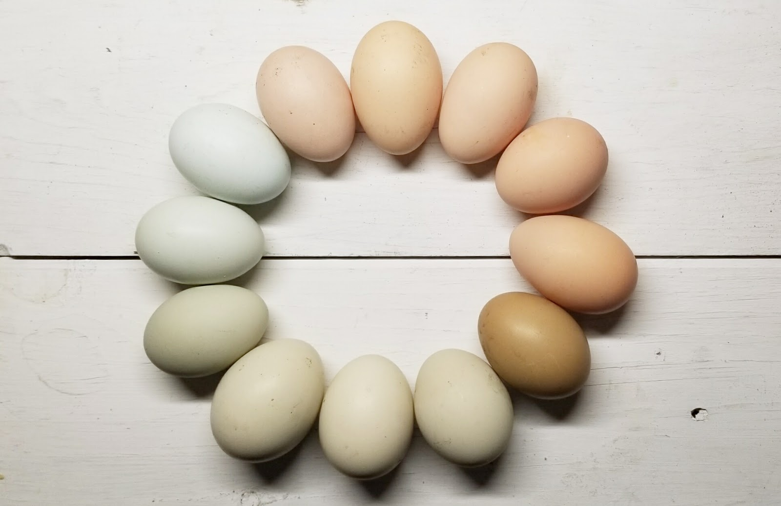 Which Breeds of Chickens Lay Colored Eggs? | Fresh Eggs Daily®