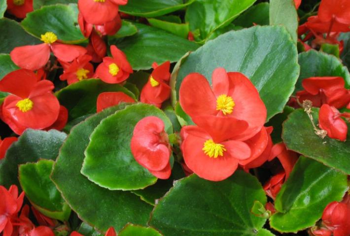 Decoraci n f cil las mejores plantas con flor para el balc n - Plantas de exterior con flor ...