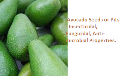 Avocado Seeds or Pits - Insecticidal, Fungicidal, Anti-microbial Properties.
