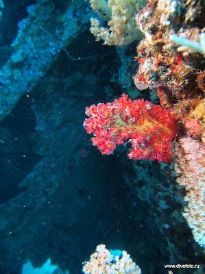 Dunraven - кораллы